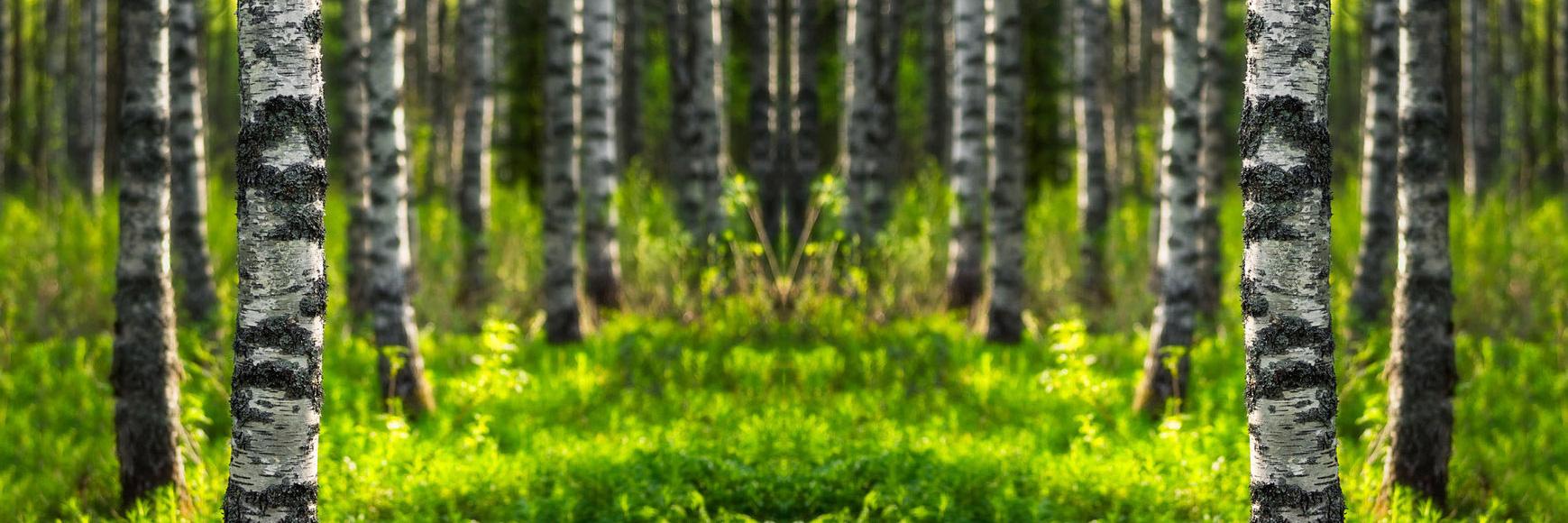 foresta-siberiana