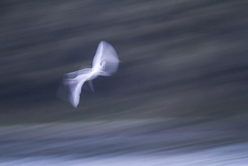 volo di uccello
