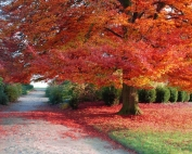 alberi-autunno