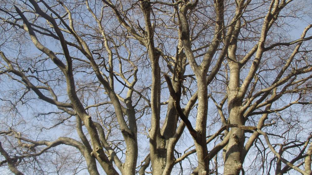 foto 5 rami del grande albero